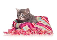 Chaton mignon Photographie stock