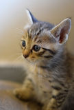 Chaton mignon ! Photographie stock