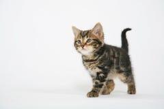 chaton mignon images stock