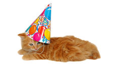 Chaton mignon d'anniversaire Photo libre de droits