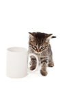 Chaton mignon dans la tasse blanche d'isolement Photo libre de droits