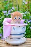 Chaton mignon dans le bac de fleur photographie stock