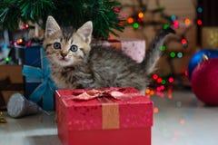 Chaton mignon dans Noël Photos stock