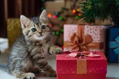 Chaton mignon dans Noël Photographie stock