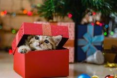 Chaton mignon dans Noël Photo stock