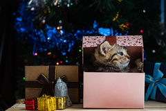 Chaton mignon dans Noël Image stock