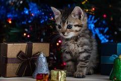 Chaton mignon dans Noël Photo libre de droits