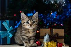 Chaton mignon dans Noël Photos libres de droits