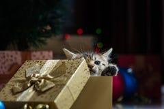 Chaton mignon dans Noël Images stock
