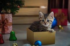 Chaton mignon dans Noël Image libre de droits