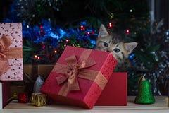 Chaton mignon dans Noël Images libres de droits