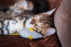 Chaton mignon de chat du Bengale à la maison photo stock