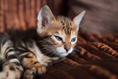 Chaton mignon de chat du Bengale à la maison photo libre de droits