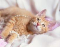 Chaton mignon de gingembre avec la perle et les pétales de rose Photos stock