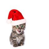 Chaton mignon de Santa Image libre de droits
