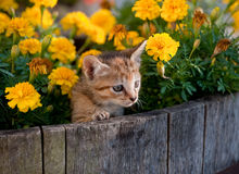 Chaton mignon en fleurs Image libre de droits