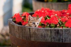 Chaton mignon en fleurs Photos stock