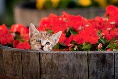 Chaton mignon en fleurs Images stock