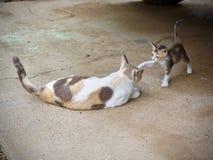 Chaton mignon et jouer de chat de mère Photos stock