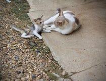 Chaton mignon et jouer de chat de mère Image libre de droits