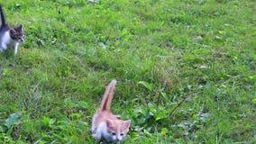 Chaton mignon jouant dans le jardin banque de vidéos