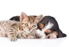 Chaton mignon se trouvant avec le chiot de chien de basset D'isolement sur le blanc Photographie stock libre de droits