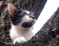 Chaton mignon sur l'arbre Image libre de droits