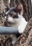 Chaton mignon sur l'arbre Photos libres de droits