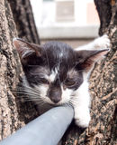Chaton mignon sur l'arbre Images libres de droits