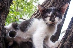 Chaton mignon sur l'arbre Photographie stock