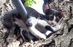 Chaton mignon sur l'arbre Photo libre de droits