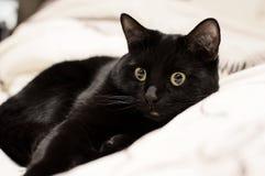 Chaton noir Photos stock