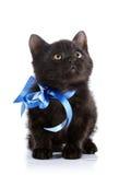 Chaton noir avec une bande bleue Image libre de droits