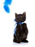 Chaton noir espiègle avec une bande bleue Photos libres de droits