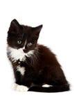 Chaton noir et blanc Photographie stock libre de droits