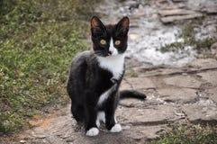 Chaton noir et blanc Image libre de droits