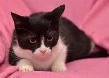 Chaton noir et blanc Photo stock