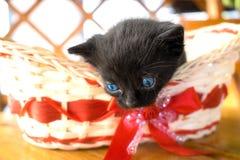 Chaton noir mignon au foyer mou Photographie stock