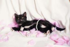 Chaton noir mignon avec la perle et les pétales de rose Photos libres de droits