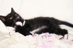 Chaton noir mignon avec la perle et les pétales de rose Photographie stock