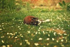 Chaton noir s'étendant dans le jardin Image stock