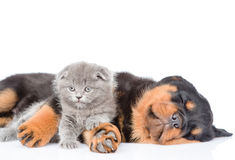 Chaton nouveau-né d'embrassement de chiot de rottweiler de sommeil D'isolement sur le blanc Images libres de droits