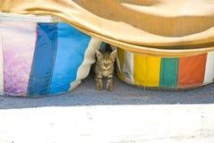 Chaton parasite mignon Photographie stock libre de droits