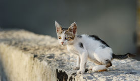Chaton parasite mignon Photo stock