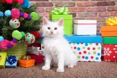 Chaton pelucheux de Noël blanc Image libre de droits