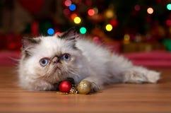 Chaton persan drôle avec deux ornements de boule de Noël photo stock