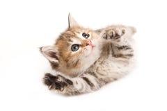 chaton peu Images libres de droits