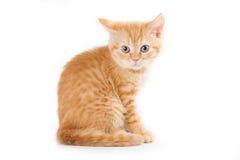 chaton peu Photographie stock