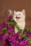 Chaton réellement mignon de Noël de meow photographie stock