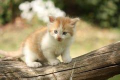 Chaton rouge blanc heureux se reposant sur le tronçon Photo stock